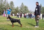 Boka Betelges on show in Macedonia at age 7 months