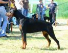 Chila Betelges on Serbian Winer show (10 months old)