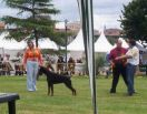 PANDORA FOR MOTXOGAN BETELGES AT AGE 9 MONTHS ON SHOW IN ZARAGOSA, SPAIN
