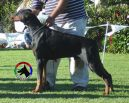 WILLY BETELGES