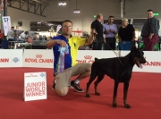 WORLD DOG SHOW ITALIA 2015