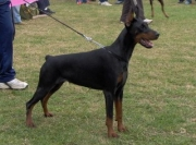 Internacional dog show in Macedonia