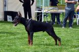 London Larson Betelges - first in puppy class - SERBIAN NATIONAL SHOW 2015