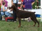 GRAND PRIX GOLDEN DOBERMANN 2012