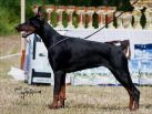 May 22nd on Speciality Show - Dobermann Cup Car Konstantin ,